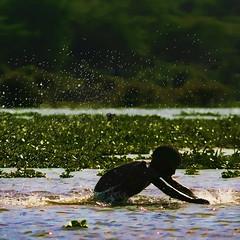 Cooling down in Lake Naivasha (regina_austria) Tags: africa boy lake water swimming kenya lakenaivasha flickraward flickrestrellas updatecollection