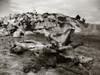 nature (PurpleErotique) Tags: california blackandwhite beach torreypines sandiego scenic coffeeshopaction