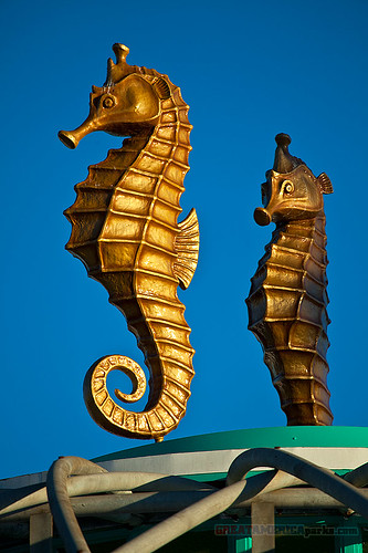 golden sea horses
