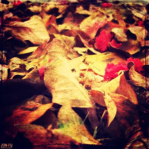 落ち葉 | Fallen Leaves