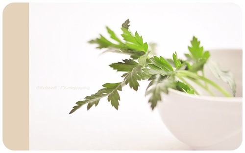 { Parsley on white }