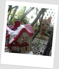 Ho ho Ho!!!! (DoNa BoRbOlEtA. pAtCh) Tags: cat gato donaborboletapatchwork denyfonseca jocaalmeida