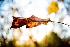 The Importance of Being a Leaf. (tyreke.white) Tags: blue orange sun green yellow leaf nikon bokeh branches flare d3000