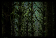 Even The Darkest Corners of The Earth... (AlpineEdge) Tags: trees green dark walking outdoors stand moss hiking earth branches corners eastbranch