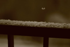 IMG_6313 (pellegrini_paris20) Tags: snowflake schnee white snow paris canon eos flake neige weiss blanc ville flocons flocon itsnows flocke flocken schneeflocke schneit flocondeneige souslaneige esschneit floconsdeneige ilneige 1000d