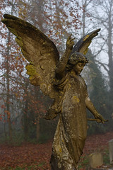 Misty morning angel (Skink74) Tags: uk autumn trees england sculpture mist 20d monument cemetery grave statue stone angel wings memorial hampshire canoneos20d lichen hursley nikkor35f14 nikkor35mm114ai