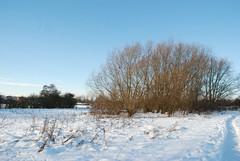 Worksop Town lock to Morse lock__To Manton viaduct_snow 515.JPG