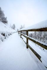 sentiero innevato (Nicola Fedrizzi) Tags: canon val neve sentiero trentino 1022 fresca nevicata pinzolo 450d rendena