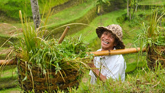 Happiness - Bali, Indonesia (franpe) Tags: bali smile indonesia rice happiness ricefield risa campesino contento