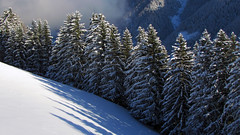 Verschneiter Wald (mikiitaly) Tags: schnee winter italy wald bäume schatten südtirol altoadige wipptal colorphotoaward treesdiestandingup rsstrong onlythebestofnature dblringexcellence tplringexcellence wipptaldez2010 artistoftheyearlevel4 eltringexcellence