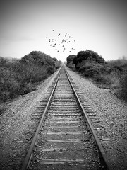 Down the Tracks (andertho) Tags: california park railroad santacruz birds delete5 delete2 delete6 tracks save3 rr delete3 save8 delete save save2 save9 save4 save5 save10 save6 sfist wilderranch wilderranchstatepark savedbydeletemeuncensored
