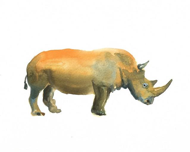 dimdi rhino