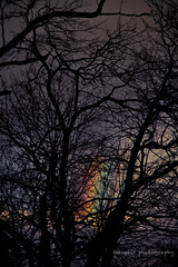 Winter's Rainbow (©eophir photography) Tags: trees winter irish colors canon naked nude landscape gold newjersey rainbow woods colorful seasons branches nj pride 7d rainbows englewood luckycharms rainbowpower potofgold bergencounty verticalportrait colorsoftherainbow eophirphotography