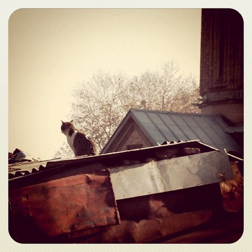 Tbilisi roof cat ;)