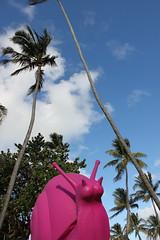 Giant Pink Snails Invade Miami Beach (RYANISLAND) Tags: pink pet pets shells animal animals miami arts shell snail palmtrees artdeco miamibeach snails atlanticocean southbeach artproject pinkish mollusks oceandrive artbasel colorpink miamiflorida southbeachmiami pinkcolor artdecowelcomecenter crackingartgroup pinksnail artbaselfestival pinksnails regenerationartproject wwwpinksnailscom theinternationalregenerationartproject