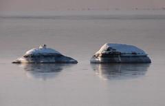 Winter at the Beach (Ken-Zan) Tags: cold bird beach stones pair tele falkenberg kenzan skrea ljunghav
