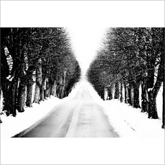 (M4j4) Tags: road winter snow slovenia even straight avenue maribor pivola drevored msh1210 msh12102