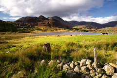 little langdale tarn (Dennis_F) Tags: wood uk autumn england mountain lake green fall nature berg grass wall clouds zeiss landscape see sheep little unitedkingdom stones district sony united herbst natur wide lakedistrict wolken kingdom steine valley grn fullframe dslr tarn holz landschaft lakeland ultra ssm tal thelakes langdale mauer schaf 1635 uwa thelakedistrict weitwinkel ultrawideangle gewsser uww littlelangdale a850 163528 sonyalpha sonydslr vollformat zeiss1635 sal1635z cz1635 sony1635 dslra850 sonya850 sonyalpha850 alpha850 sonycz1635