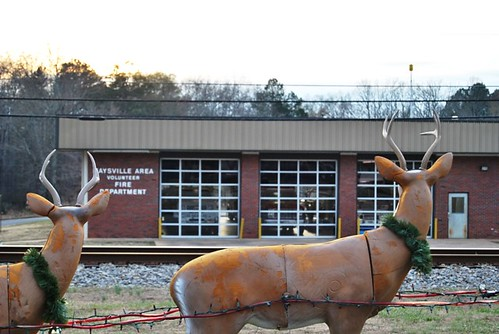 town reindeer