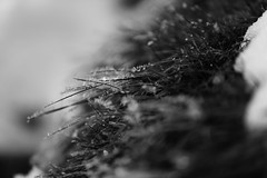 361/365 - The Winter's Kiss (Alex Stoen) Tags: winter bw naturaleza france mountains cold macro blancoynegro nature grass canon snowflakes frozen blackwhite weed flickr frost noiretblanc details picasa nb bn gotas invierno wilderness monday flakes cristal silvestre froid detalles frio hielo lunes montaas montagnes picassa hierba coldness escarcha herbes congelados rose enfoque project365 manigod frialdad creativefocus ef70200f28lisusm creativecomposition canoneos5dmarkii 361365 5dmk2 enfoquecreativo alexstoen alexstoenphotography christmas2010 composicioncreativa