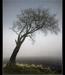 Into nothing..... (Chrisconphoto) Tags: mist tree fog freezing sthelens crank merseyside chrisconway billinge mistytree intonothing