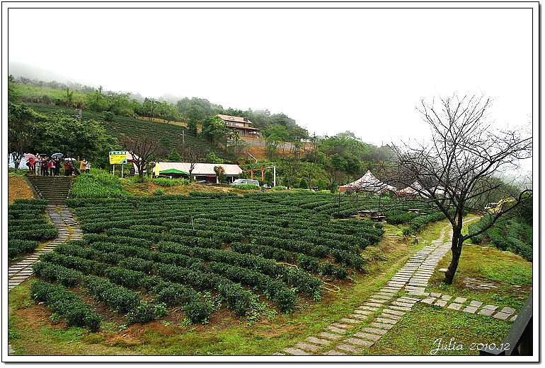 玉蘭茶園 (11)