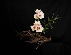 Ikebana Sogetsu (realizzato da Luca Ramacciotti) (LucaRam) Tags: italy sculpture flower art nature japan season arte decorative interior ikebana natura palm zen amaryllis essence meditation organic fiori minimalism minimalismo palma arrangement giappone interni stagioni decorazioni scultura organico scenografia  scenography sogetsu bamb kenzan meditazione  essenziale bambuseae kad lucaramacciotti ikebanado lucaram wwwikebanadocom httpwwwflickrcomgroupssogetsuikebana canoneos1000d