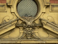 Nesting dove (uempe (only sporadically here)) Tags: city house building bird art window animal architecture digital town photo europa europe foto prague pigeon dove fenster kunst capital