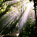 cloud forest rays