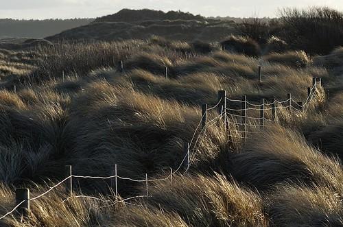 marram dunes