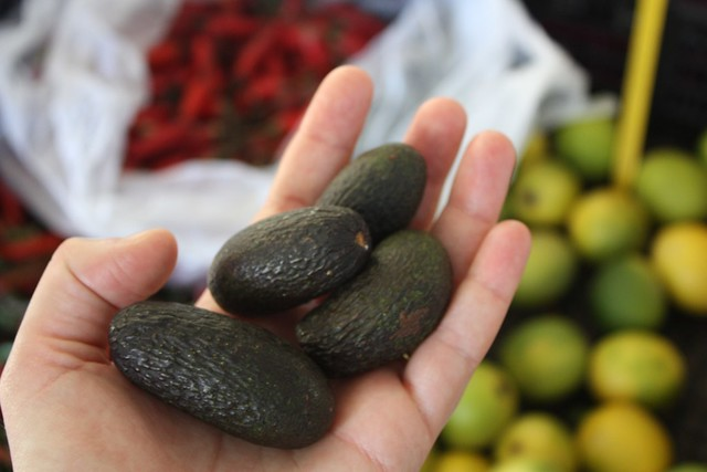 mini avocados