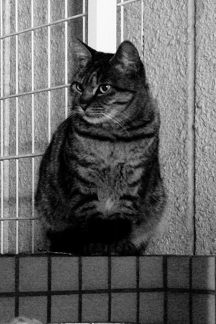 Today's Cat@2011-01-12