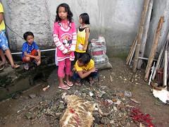 Kids (Mangiwau) Tags: festival kids indonesia java blood eid goat goats jakarta gore cutting lamb lambs throat kambing bogor slaughterhouse sacrifice slaughtering adha sacrificial potong idul dipotong