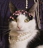 20100816_02201b (Fantasyfan.) Tags: portrait pet girl topv111 tag3 taggedout lady cat topv333 tag2 tag1 girly destruction jewelry complete accessory täystuho fantasyfanin