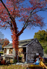 Of Shelter (bijoyKetan) Tags: sky house tree fall colors boston landscape shelter newburyport ketan canon1585mmisusm bijoyketan