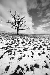 Dead tree in the melt (blinkingidiot) Tags: nottingham blackandwhite snow tree landscape dead horizon wideangle melt nottinghamshire oxton absoluteblackandwhite