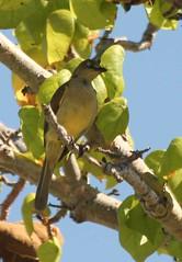 Mozambique-4410