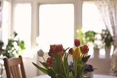 Tulips (look_on_the_brightside) Tags: pink flowers light colour green colors spring warm tulips backlighting