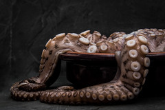 The Escapologist (ToriAndrewsPhotography) Tags: octopus food cookery pot photography andrews tori
