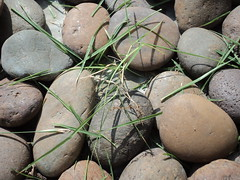 Rocks (sam_ombregt) Tags: grass leaves dull rockes