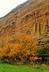 Nature's Hieroglyphics (Yasmin de light) Tags: autumn nature writing gold design colours earth patterns egypt textures copper hieroglyphics cliffe writingonthewall pharaohs scripts cliffes awesomecolours