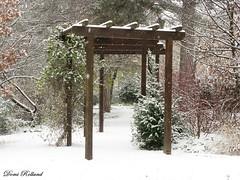 Romance (Domi Rolland ) Tags: france europe neige 2010 millau aveyron hivers midipyrénées canong9 parcdelavictoire