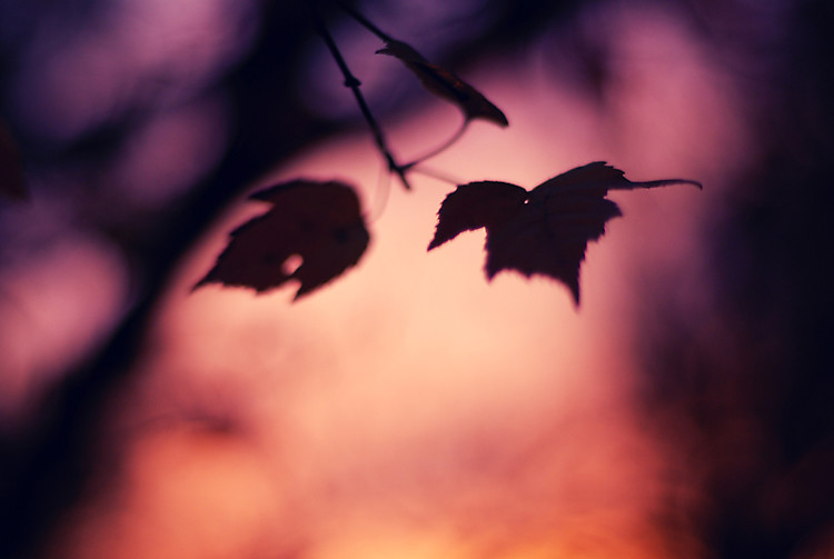 November (20)