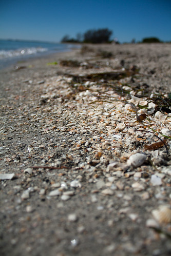 Beach - Shells Closeup
