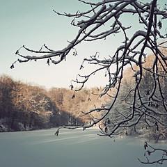 (helle-belle) Tags: winter lake ice sunshine forest denmark is vinter branch danmark winterwonderland 2010 sne grene kolding skov sø lovelymonday marielundskoven marielundsøen canoneos5dmrkii iwasntreallygoingtoshareanyphotographstonight wantedtogotoreallyearlytobed butinsteadiendedupuploading3photographs forestcoveredinsnow snedækketskov