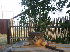 Bored cat in the sunset () Tags: trees sunset cat village russia bored lazy lie counry