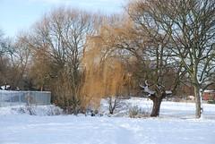 Bracebridge lock to Priory__To Manton Viaduct_snow 437.JPG