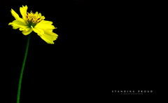 Explored   Standing Proud (Subhash Kumarapuram) Tags: flowers plants plant black flower green nature beauty yellow proud standing canon flora 7d subhash kumarapuram subhashkumarapuram