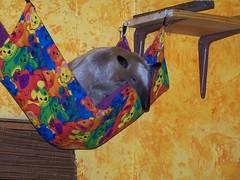 It's a hammock