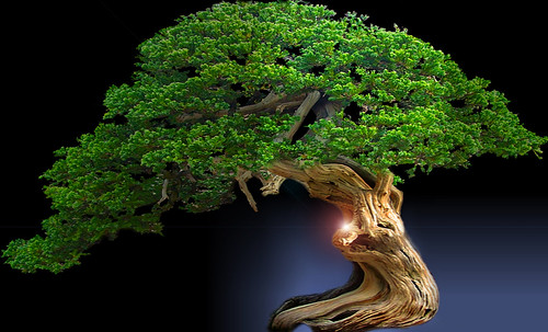 """Bonsai044 • <a style=""""font-size:0.8em;"""" href=""""http://www.flickr.com/photos/30735181@N00/5261338035/"""" target=""""_blank"""">View on Flickr</a>"""